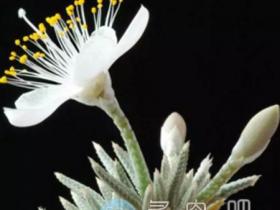这15种多肉植物开的花,你见过吗?
