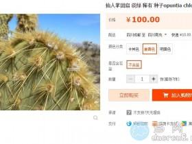 淡绿仙人掌团扇 Opuntia hlorotica,稀有价格不菲