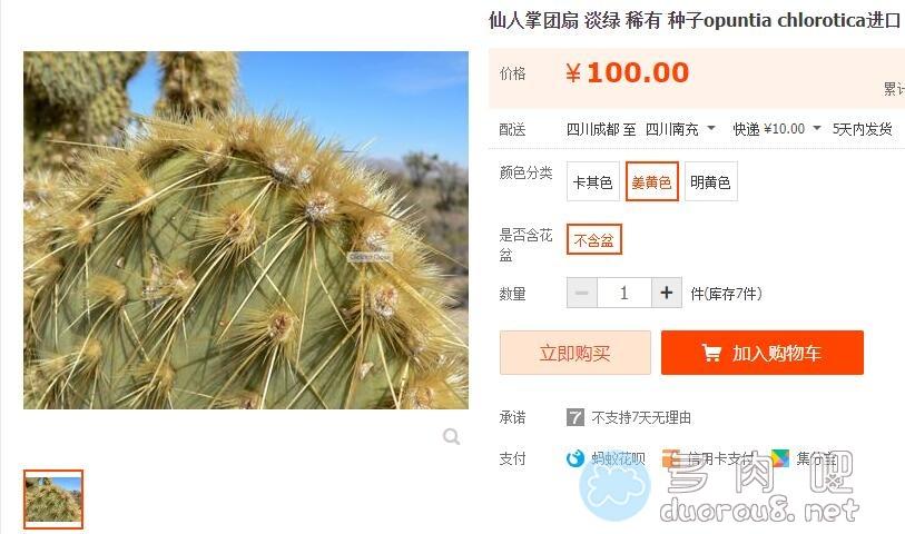 淡绿仙人掌团扇 Opuntia hlorotica,稀有价格不菲图片 No.1