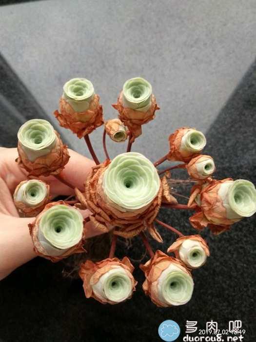 山地玫瑰的记录贴,还真是特别美有木有?图片 No.67